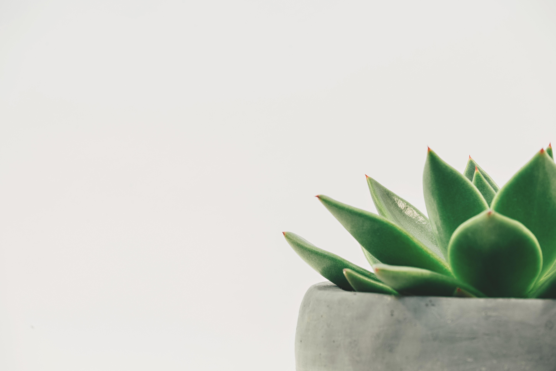 5 tipp, hogy a szobanövényed túlélje a telet