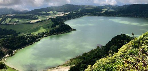 Mit keresnek a kecskék egy azori-szigeteki teaültetvényen?