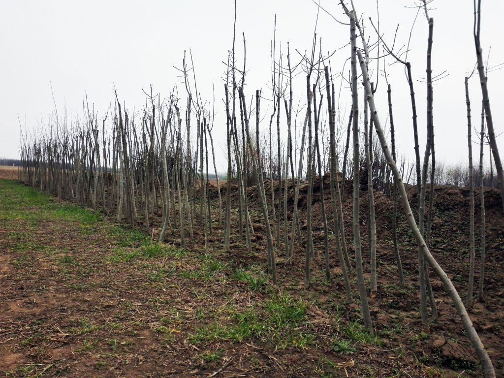 Ősi magyar gyümölcsfajták
