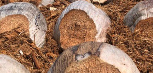 Kókuszrost: amit tudnod kell róla