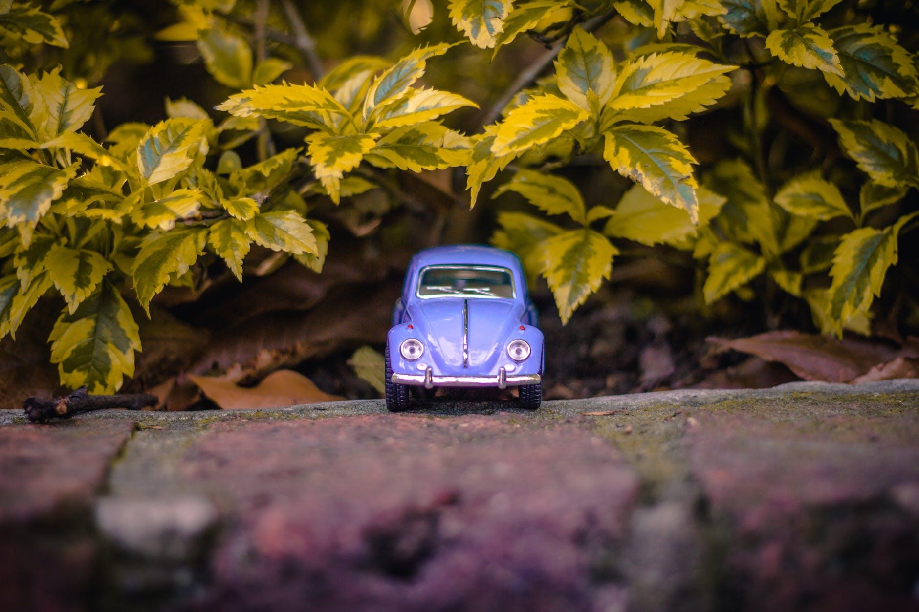 5 tipp növényesített kocsibeállóhoz