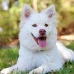 Kutya: Hogyan válasszuk ki a megfelelő fajtát? – 2. rész