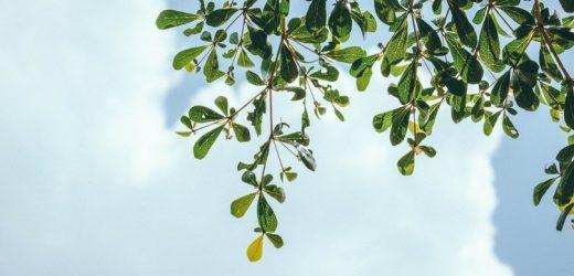 A növényvilág LEGjei
