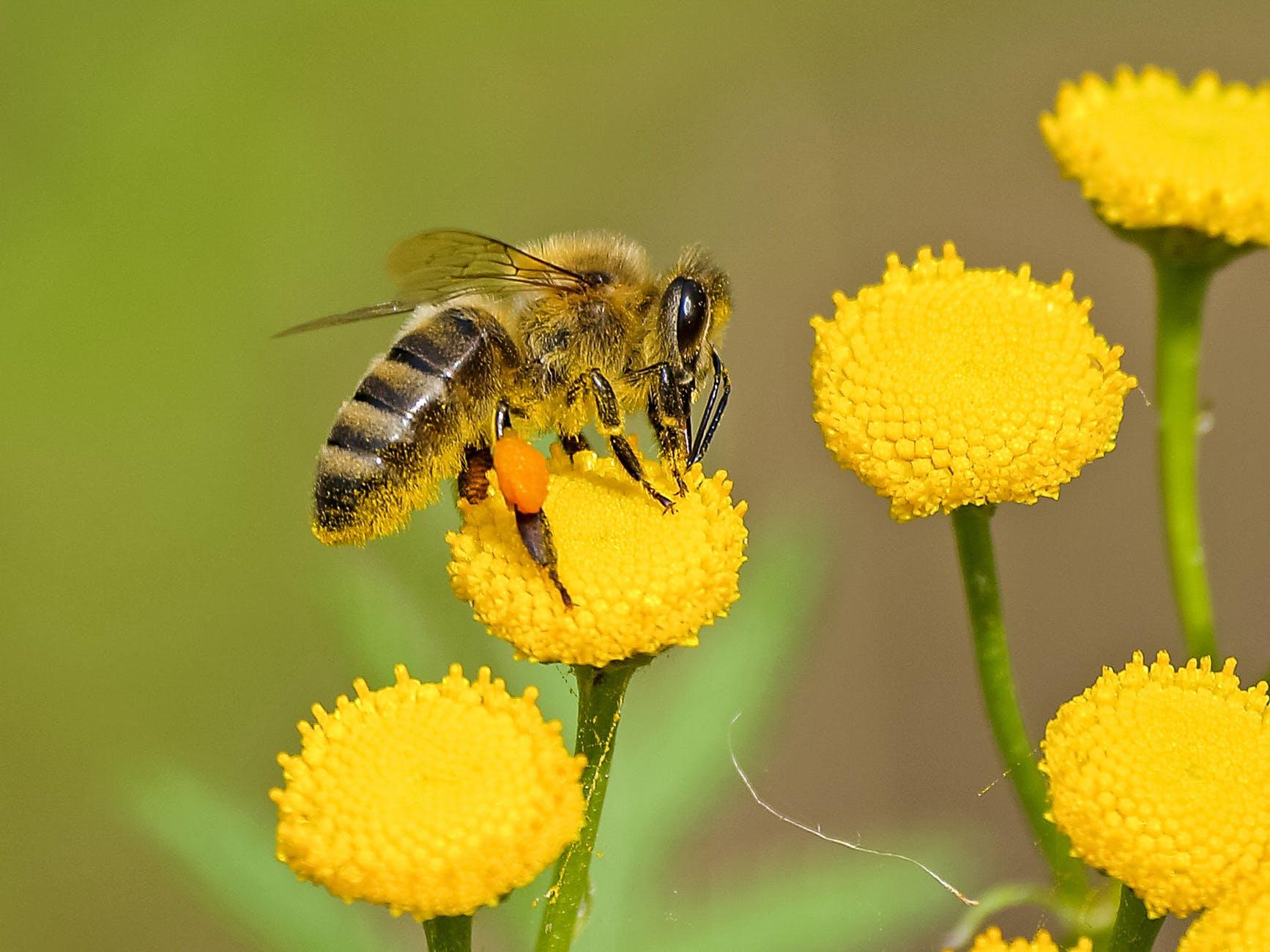 Így mentsd meg a méheket!