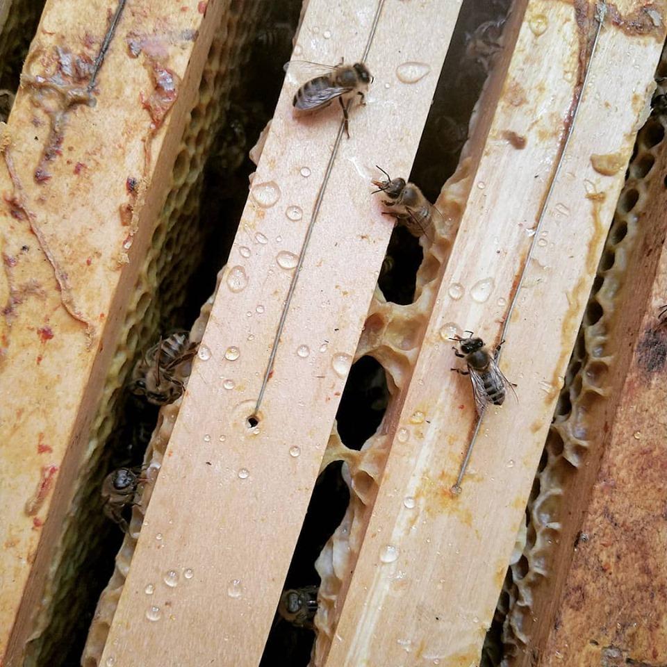 Méhek a kaptárban a Mézcsepp Manufaktúrában