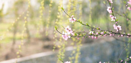 Én kis kertem – új rovat indul