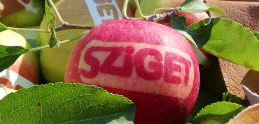 A termelő, aki a Sziget fesztiválra is speciális almát termel