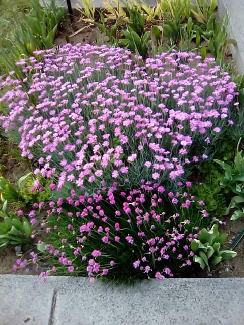 Én kis kertem: Pilisből