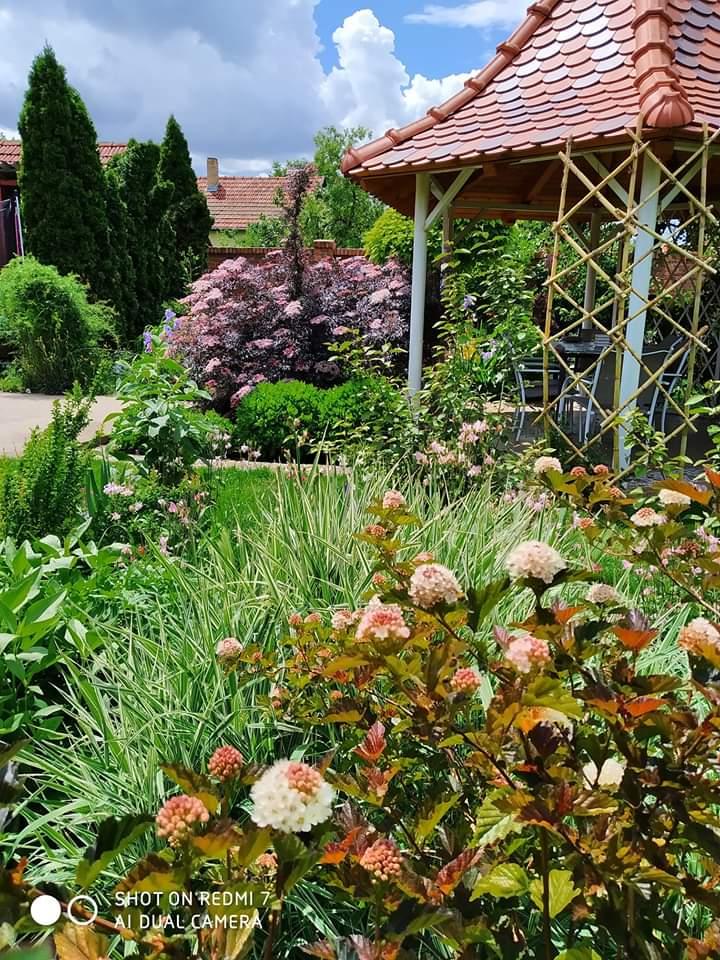 Én kis kertem: Zentáról