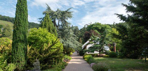 Fogadj örökbe egy fát a Folly Arborétum fáiból!