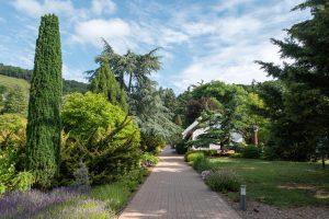 Folly Arborétum Oszlopos tiszafa Robusta
