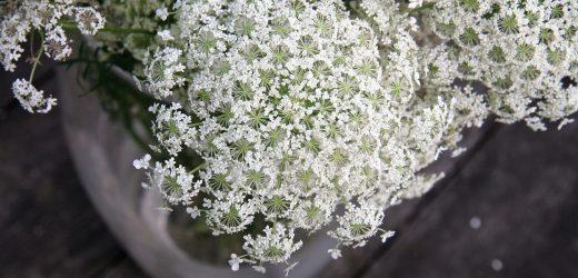 Vadmurok a vázában