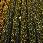 Veszélyben a kertészeti ágazat: a koronavírus újabb negatív hatásai