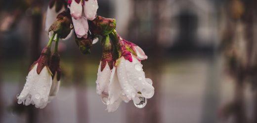 5 csodanövény a téli teraszra