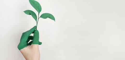 Biokertészkedés egy felborult világban?
