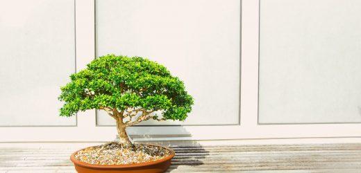 A bonsai ápolása: tippek kezdő bonsaitartóknak