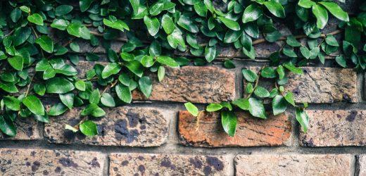 5 légtisztító szobanövény az egészséges otthonért