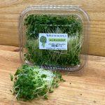 brokkoli vírusok ellen