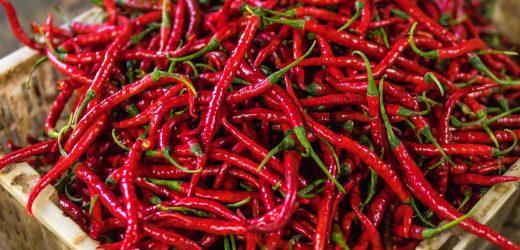 Chili metszése konténeres termesztésnél