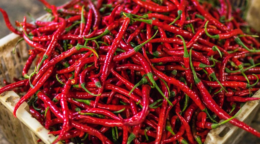 chili metszése ritkítás érésgyorsítás