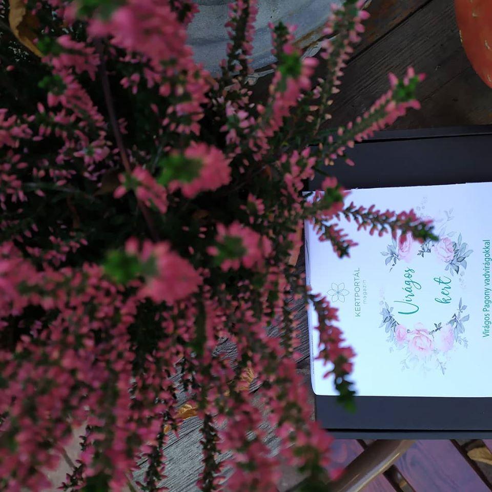 Csarab: az őszi-téli balkonvirág