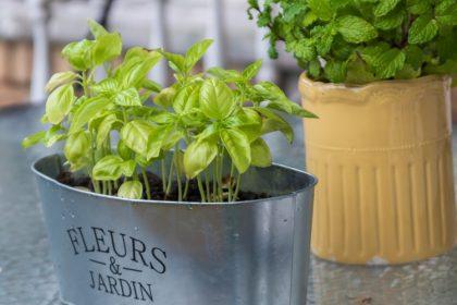 ehető szobanövény