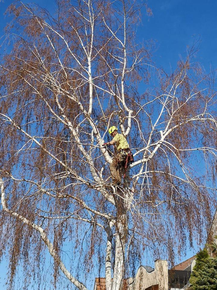 faügyelet faápolás
