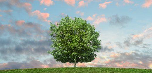50 millió fa ültetése egy nap alatt