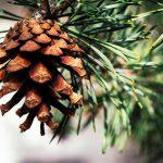 3 tipp az örökzöld növények vásárlásához