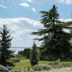 Folly Arborétum: Himalájai cédrus névadó játék