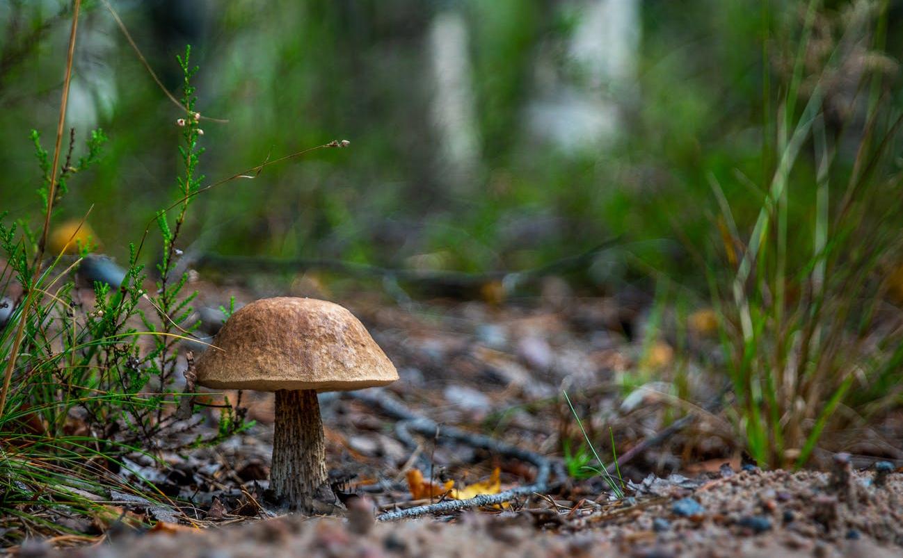 Könyvajánló: Erdők-mezők gombái
