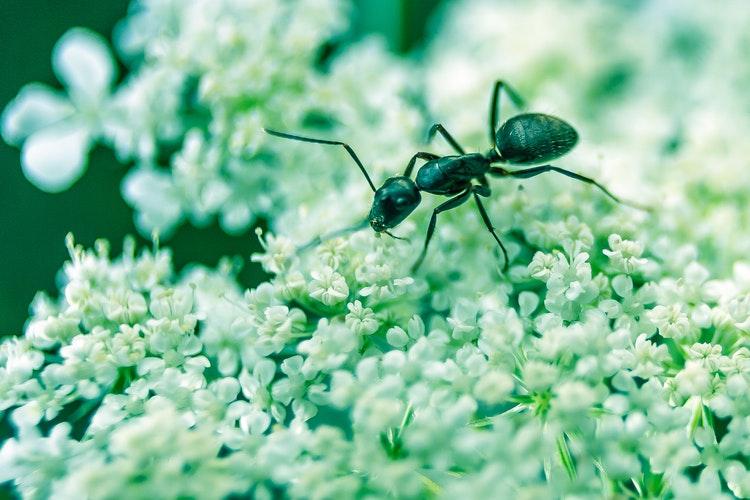 5 tény, amit a hangyákról tudnod kell!
