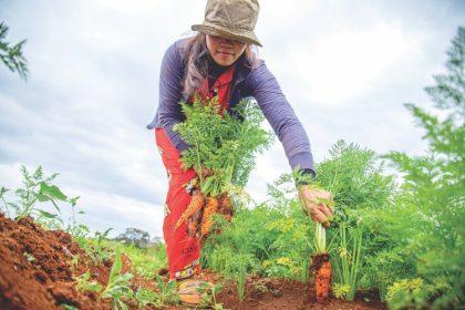 kezdő kertész első szerszámok