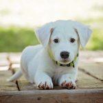 Xilit és xylitol: ezt ne add a kutyádnak