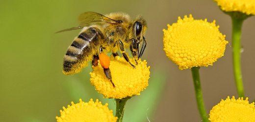 Íme a legfontosabb élőlény a földön: méhek