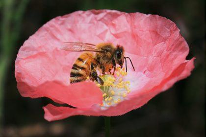 Mézcsepp Manufaktúra méhek, mézkészítmények