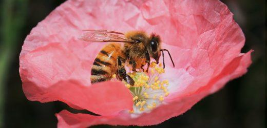 """Méhészfamília: """"Lenne mit tanulni a méhektől!"""""""