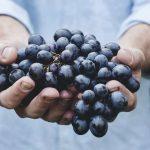 mediterrán klíma vár a bortermelőkre