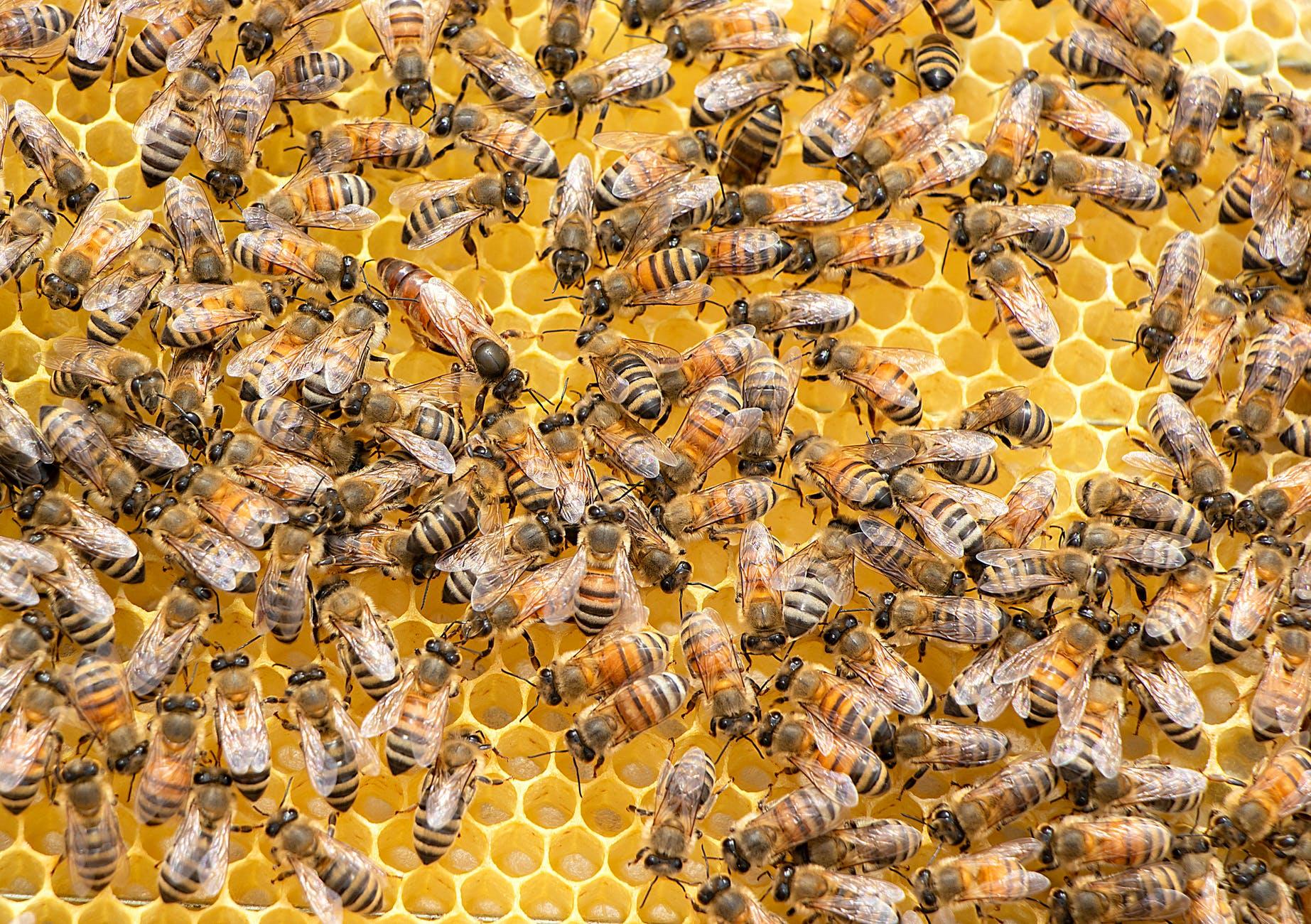 méhhotel