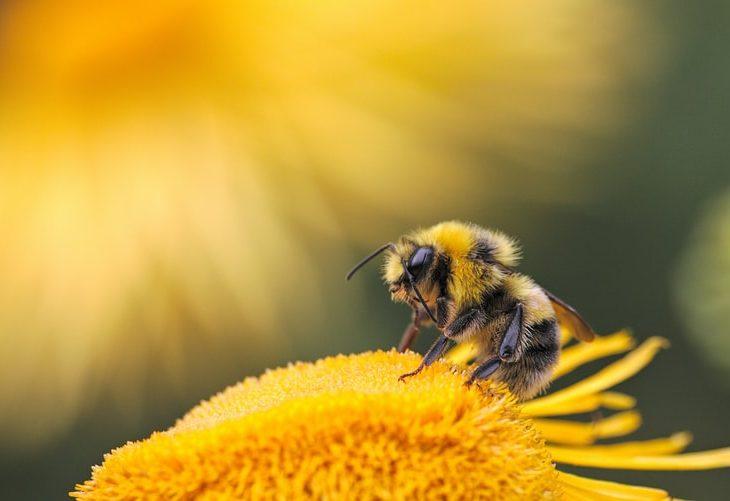 méhpusztulás