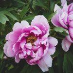 mérgező növények - gyerek a kertben - kertportál - hobbikert