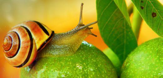 Meztelen csigák: így védekezz ellenük a kiskertben