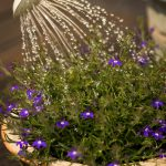 növényfürdetés tippek