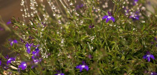 Növényfürdetés tippek az élettel teli szobanövényekért