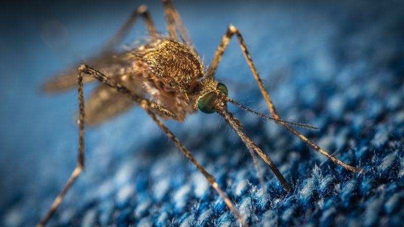 Szúnyogriasztás: Rengeteg a szúnyog mindenhol
