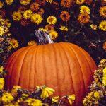 sütőtökös receptek októberre kertportál konyha