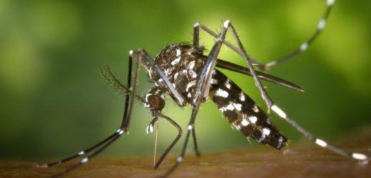 Katasztrófavédelem: ezer hektáron folytatódik a szúnyogirtás