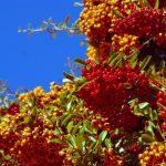 szmogálló szupernövények