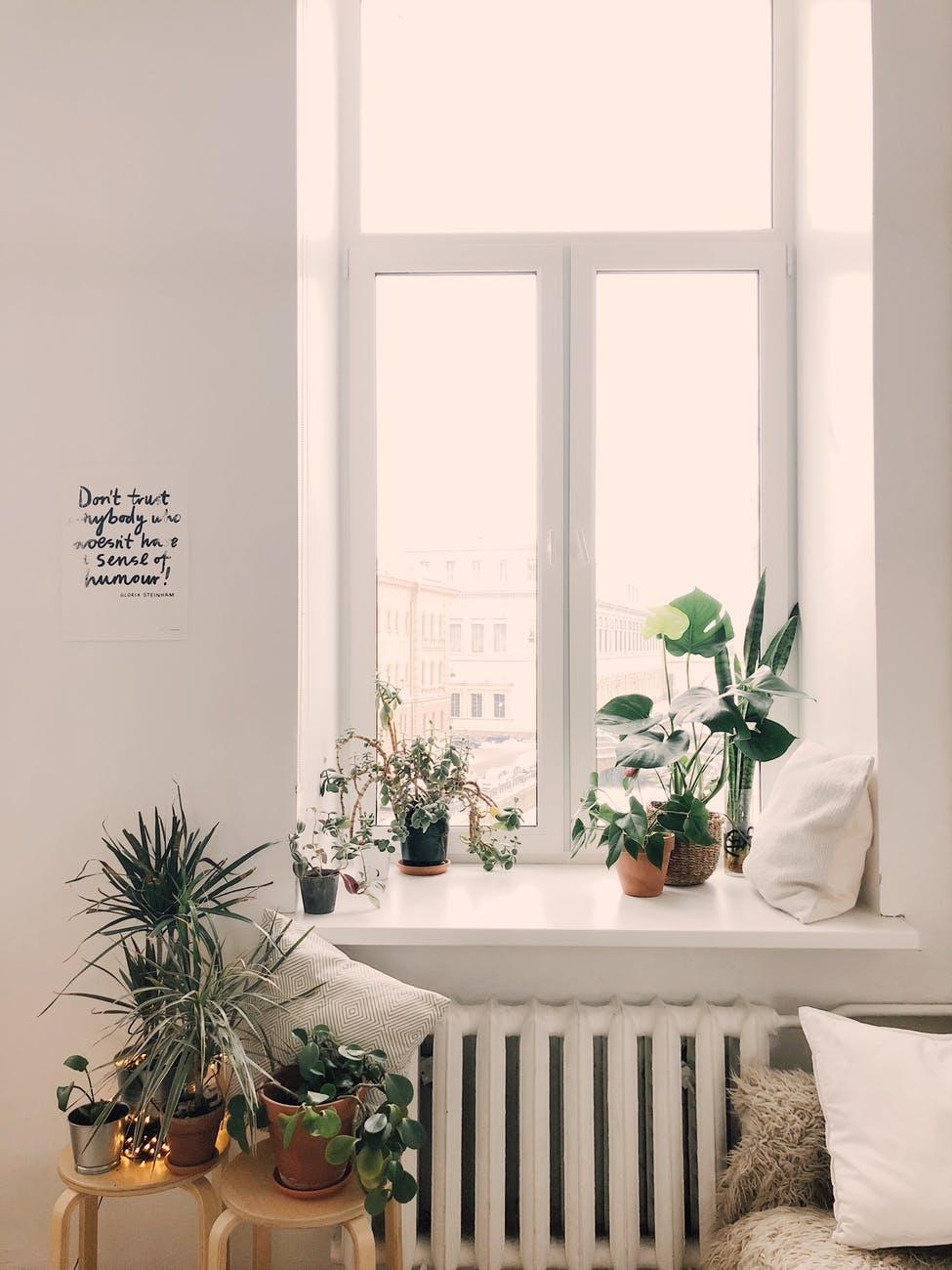 Kipusztíthatatlan szobanövények