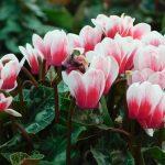 top 5 virágzó szobanövény